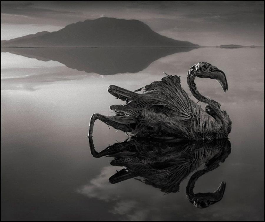 nick-brandt-calcified-flamingo-lake-natron