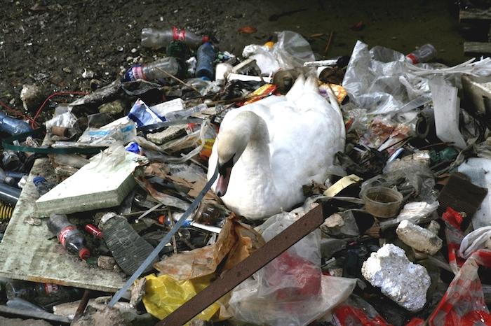 Swan-nest-Amsterdam