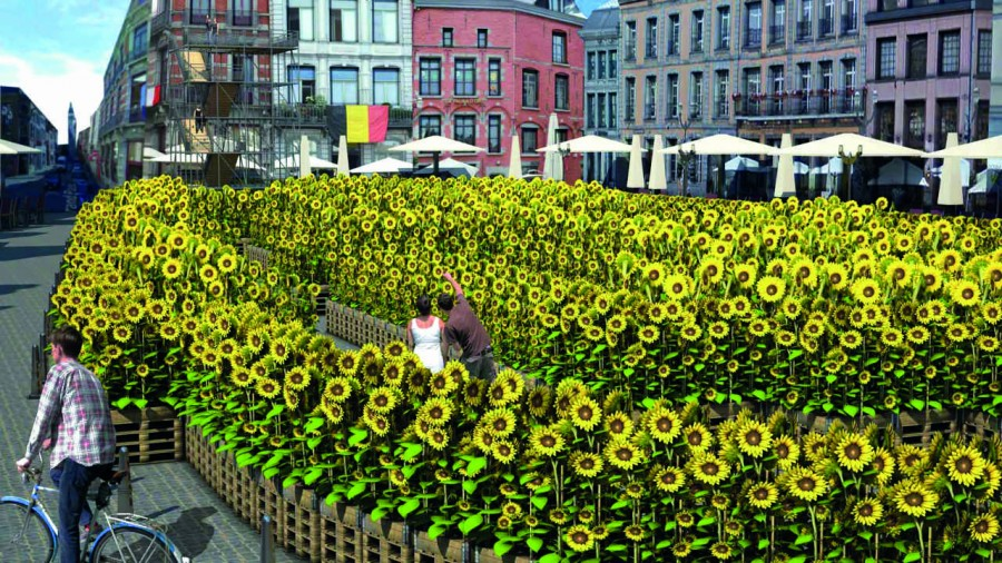 Mons Grand Place Sunflowers